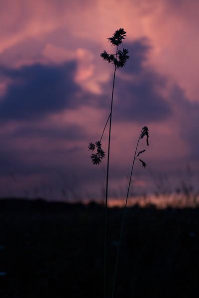 red-clouds-dawn_8784169816_o.jpg