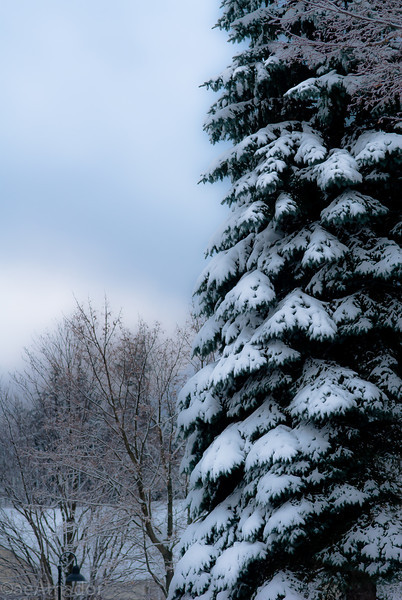 Winter Wonderland in Vermont-2.jpg