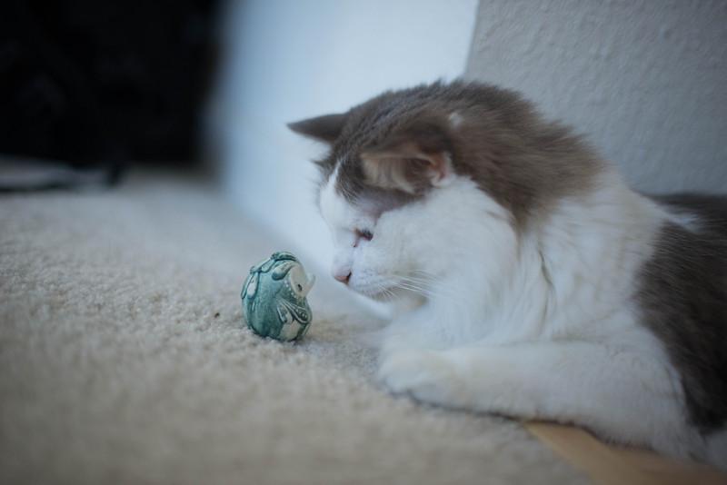 Mokono_Sloke_And_The_Kitty-9