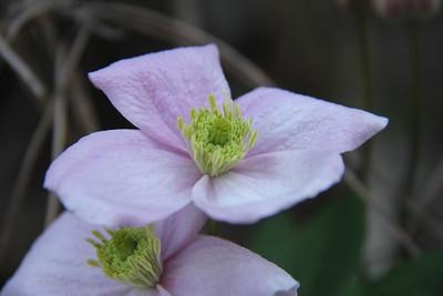 2016 Flowers