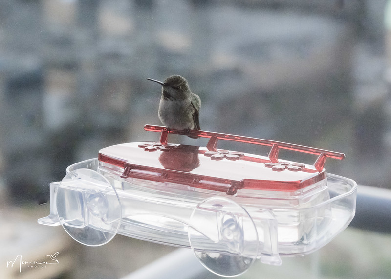 2021 - The Hummingbird Chronicles-1257_edit-2.jpg