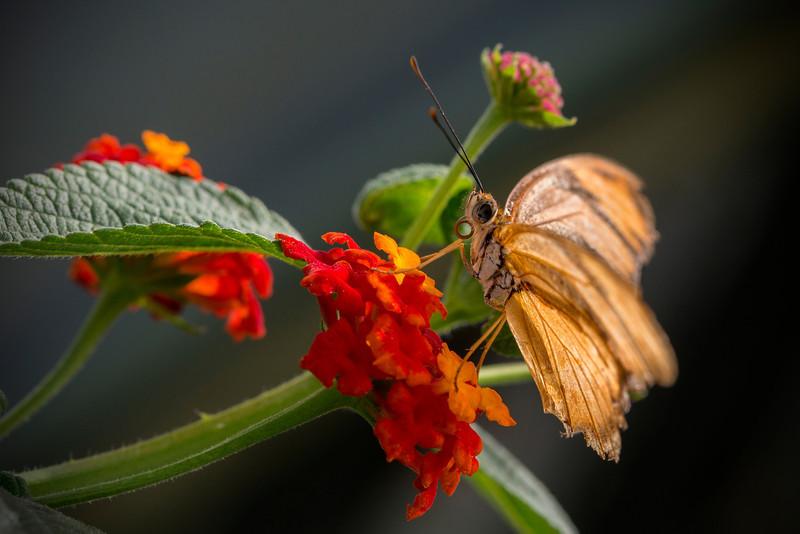 Tattered Wings.jpg