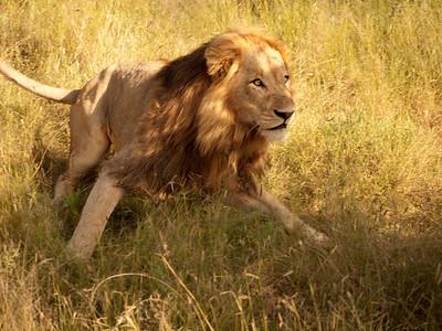 South Africa: Wildlife