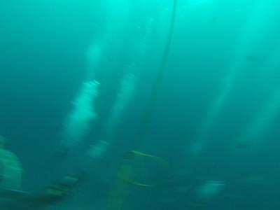 Eden Scuba Diving South Africa