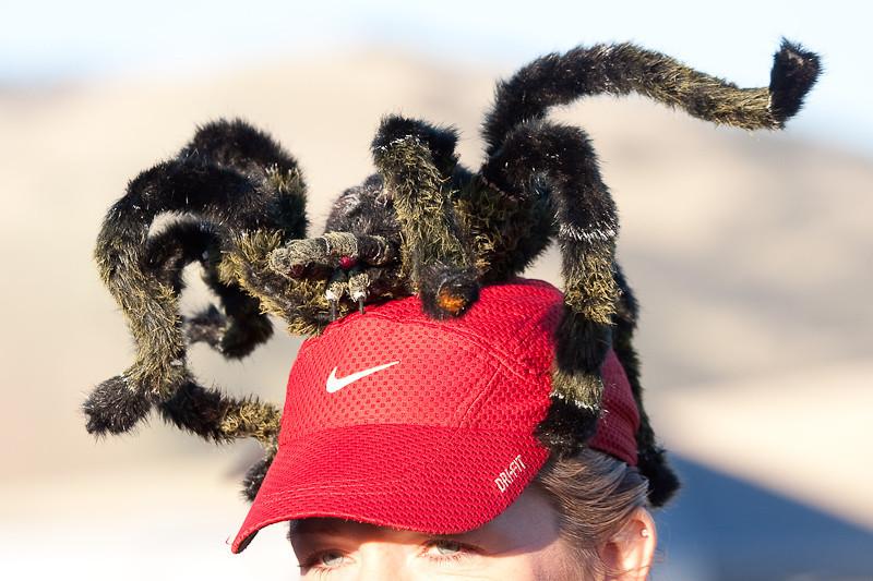 tarantula-1.jpg