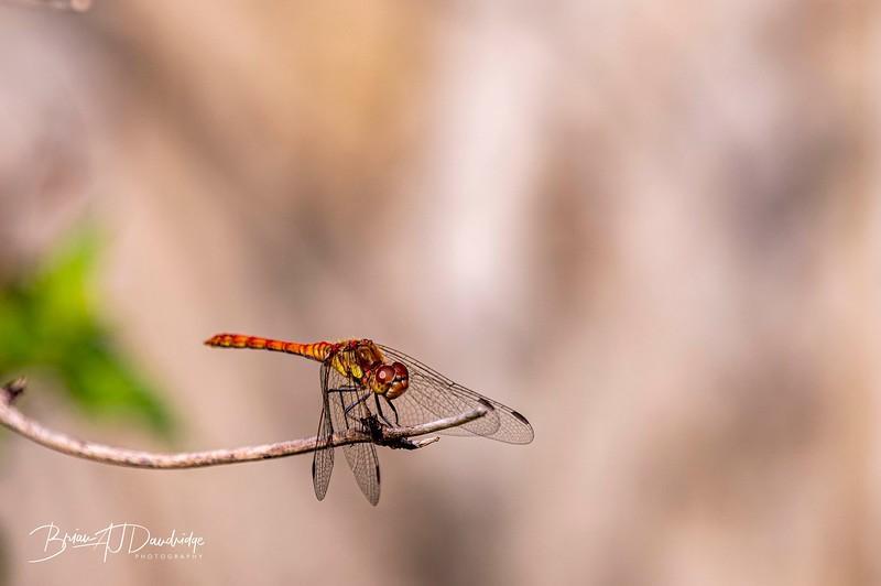 Garden_insectlife-0693.jpg