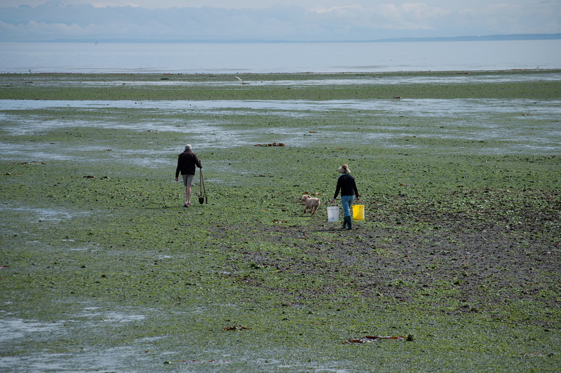 Dennis and Sandra heading out at low tide to go clamming.