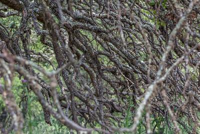 francisco sipiora gutierrez