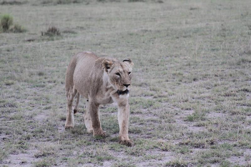 Kenya 2019 #2 1855.JPG