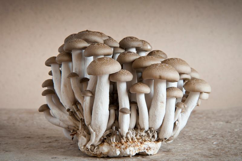 mushroom -5498.jpg