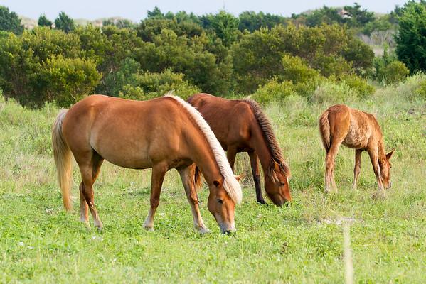 Shackleford Banks Horses - Glenn & Patrick
