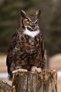 March 11, 2012 - Owl Festival