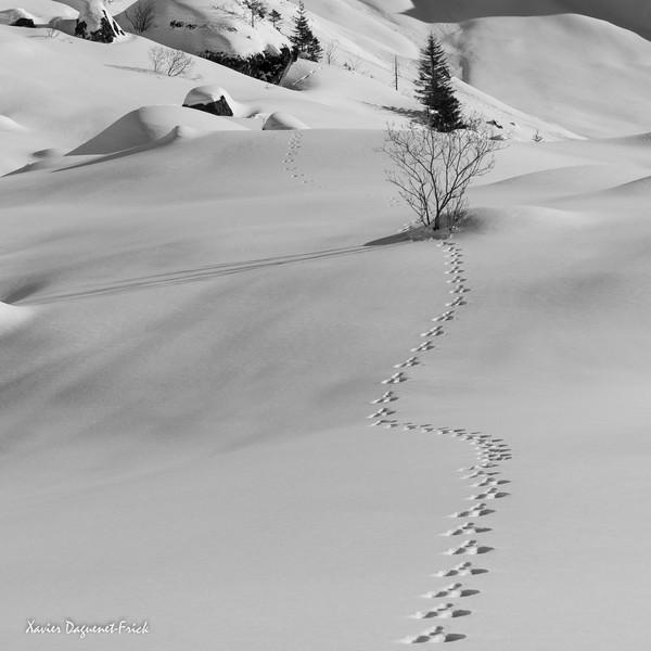 Swiss Alps - Winter