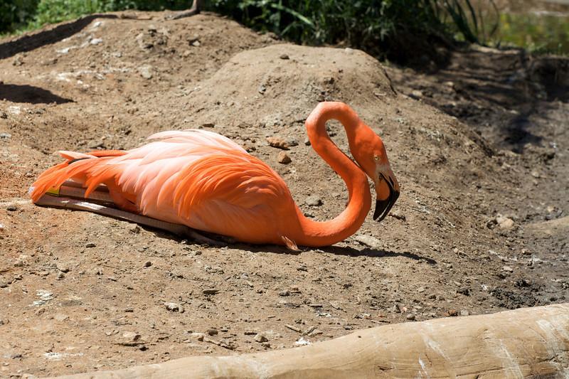 Zoo_Trip_5.jpg