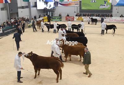 AGRI EXPO  November 2019