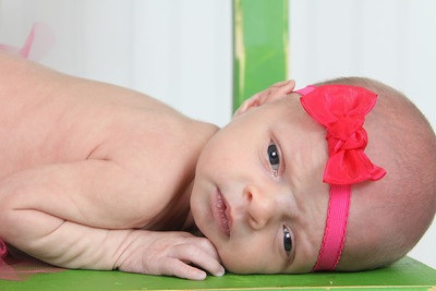 Miss Sanchez (2 weeks old)