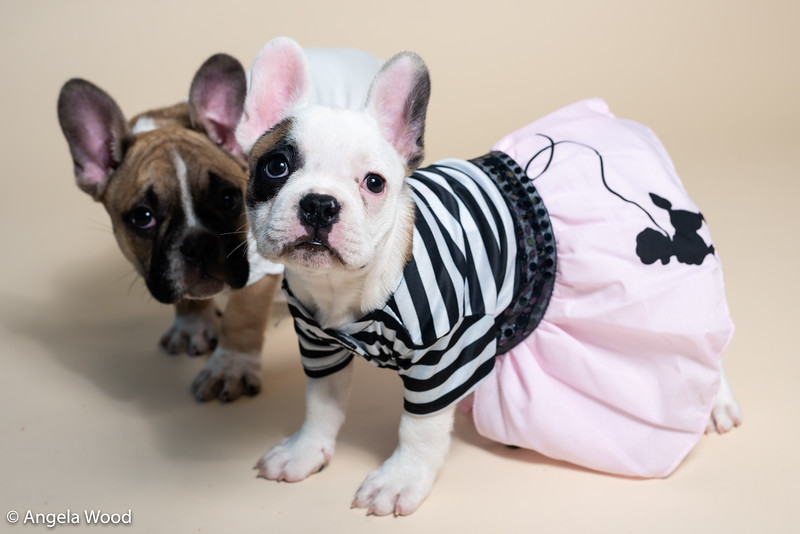 Puppies23.jpg