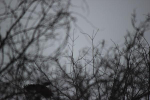 3 Jan 2021 Falaise Birds