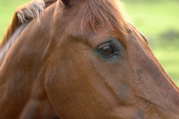 Horses - France, England, Sweden, Ireland & Wales.