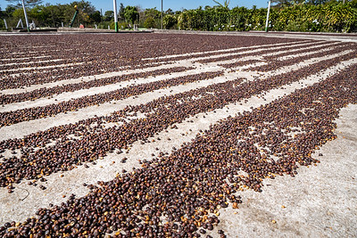 Doka State Coffee Tour_1533