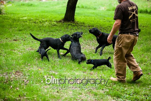 Webber Puppies 5.15.14