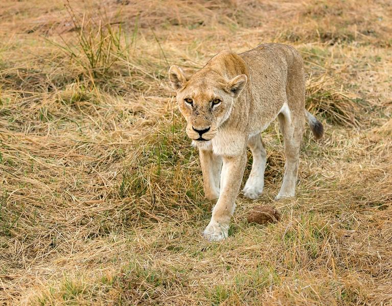 2014-08Aug-Okavango Masters-93-Edit.jpg