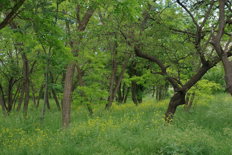 Pałacyk w Maku - ogród
