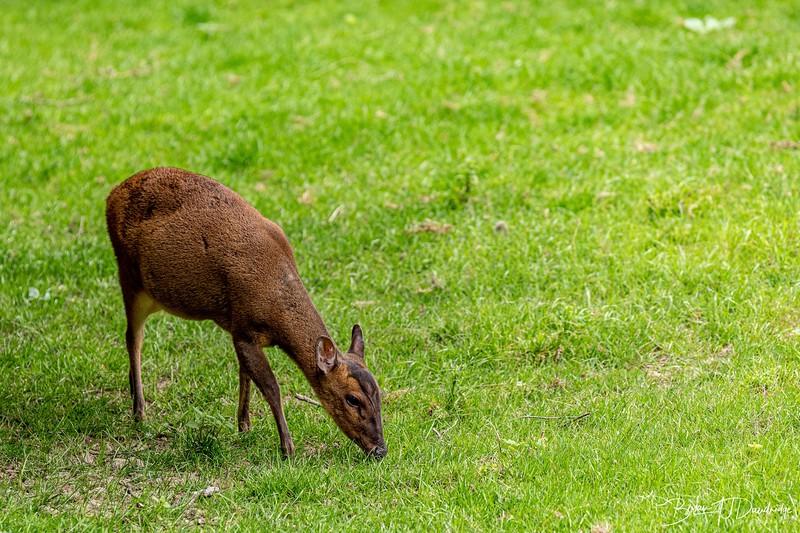British Wildlife Centre_D850-0008.jpg