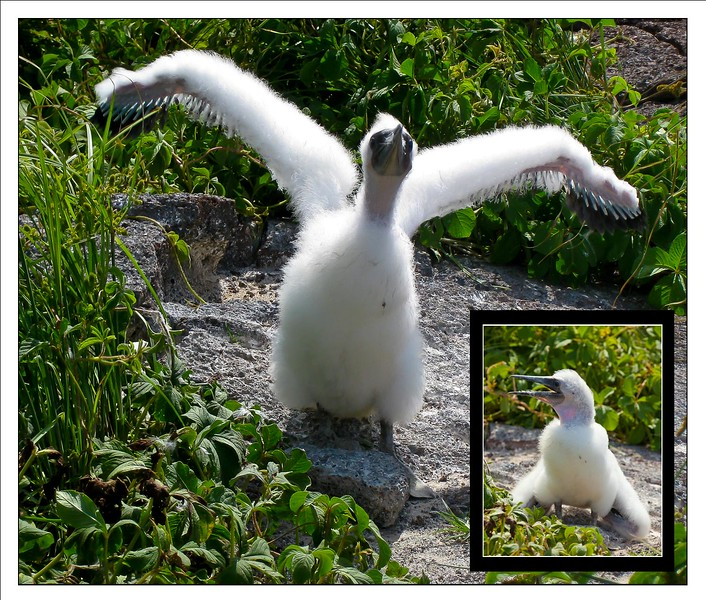 BLURB PAGE - 10X8 - EXACT FIT - 8.46 X 9.95-chick insert.jpg