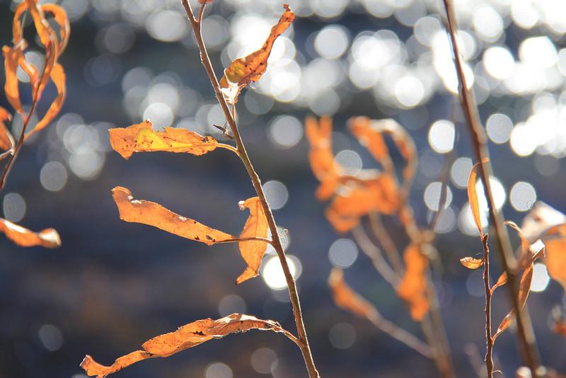 sedona red leaves on water.jpg
