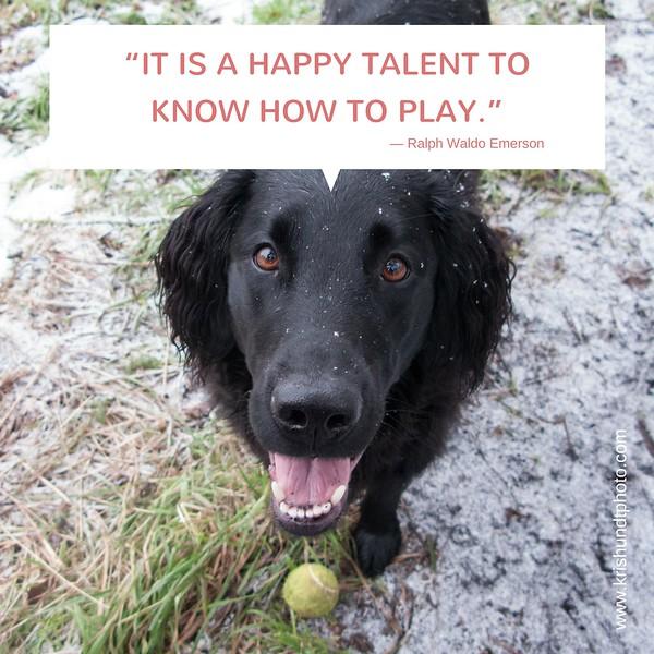 happy talent.jpg