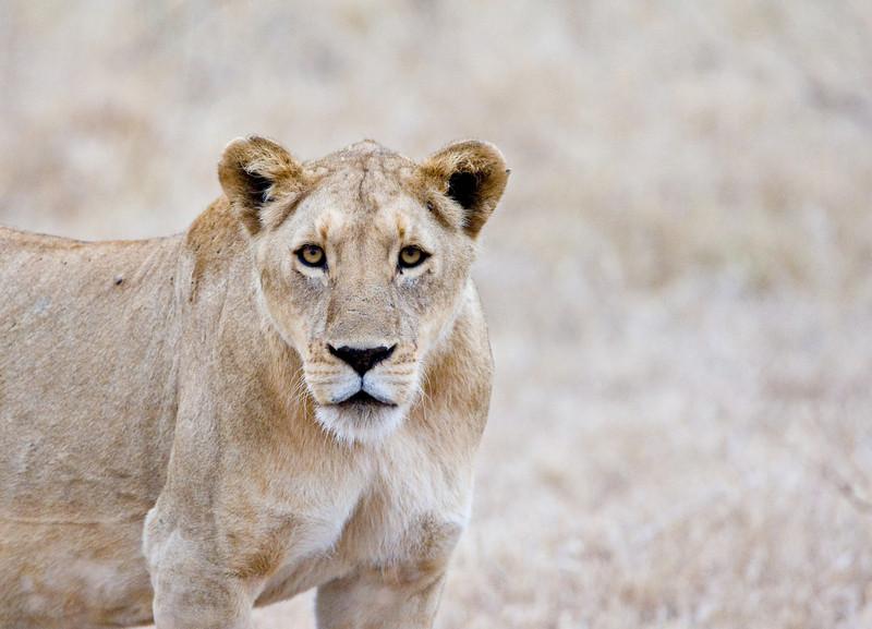 Tanzania Safari - October 2007