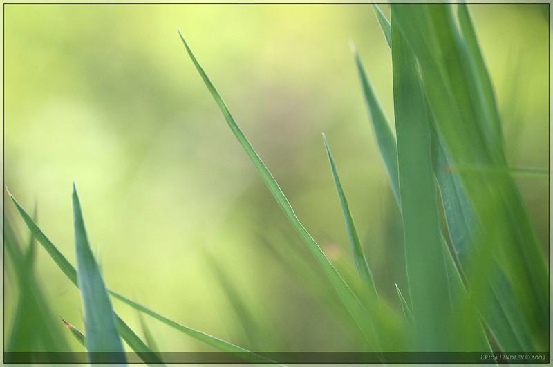 CRW_9869_Aperture_preview.jpg