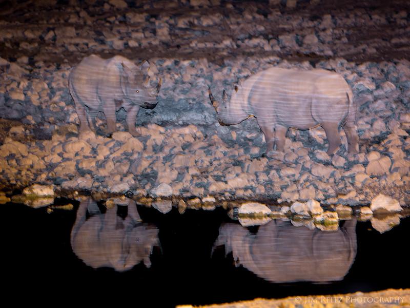 Two Black Rhinos meet at the water hole - Etosha National Park, Namibia.