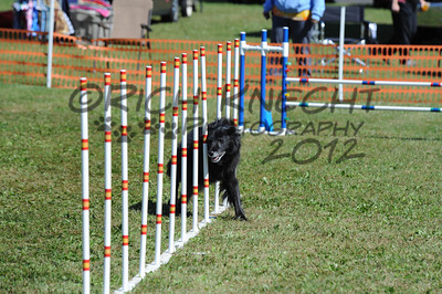 """Sunday Excellent Standard 20"""" Group A"""