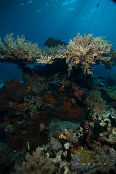 Nusa Laut Seascape © Chris Mitchell