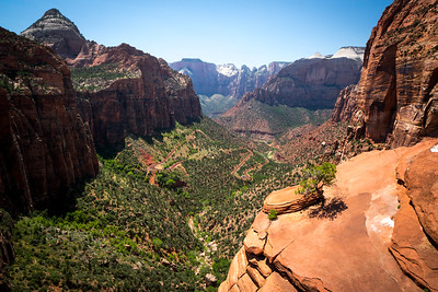 Zion: Canyon Overlook