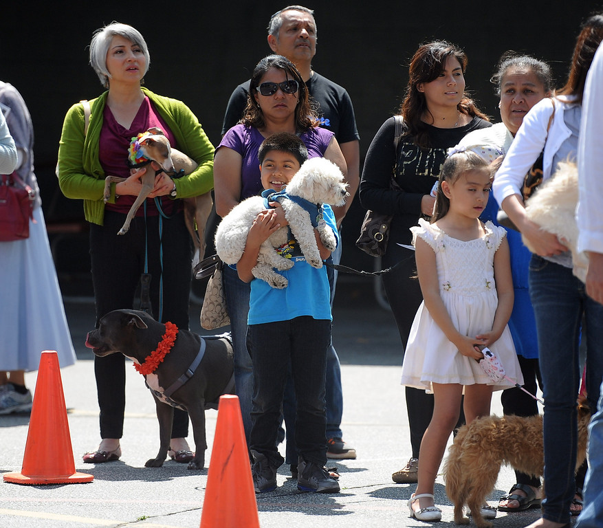 . Dozens wait with their pets during the traditional Blessing of the Animals at St Andrew Church School on Saturday, March 30, 2013 in Pasadena, Calif. 