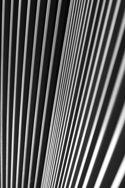 wood in black and white.jpg