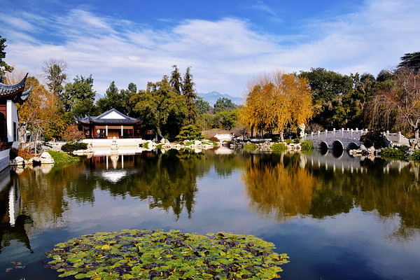 Huntington Gardens, Pasedena, CA (January 2019)