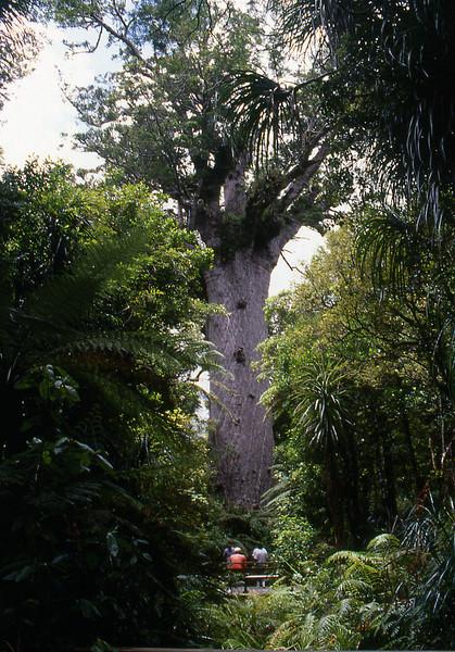 NZ_017.jpg