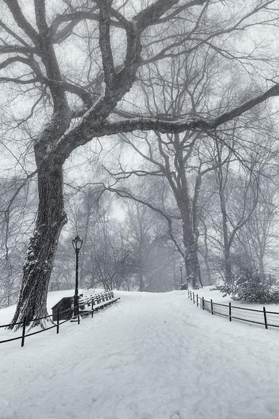 Winter's Solitude