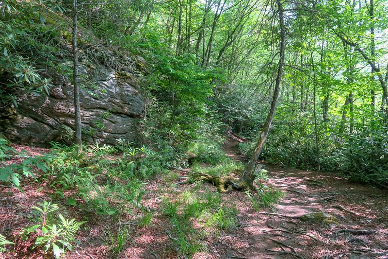 Mountains-to-Sea Trail -- 4,320'