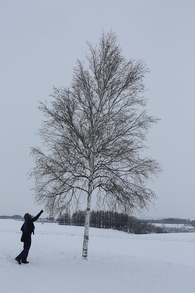 David reaches for the Lone Birch Tree...