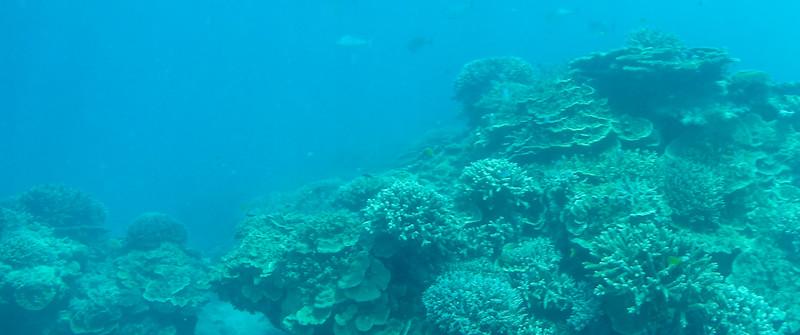 09. Lady Elliott Island-1432.jpg