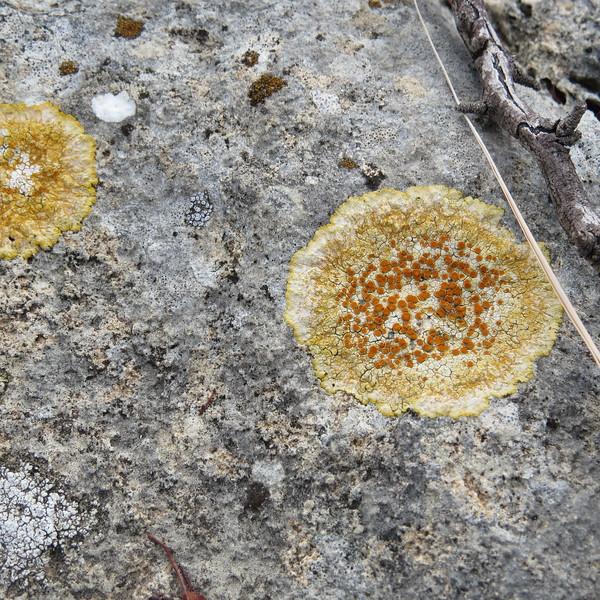 orange lichens were plentiful.JPG