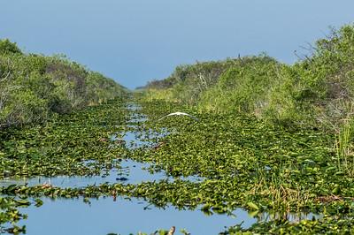 North Everglades