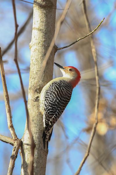 Birds-103-2.jpg