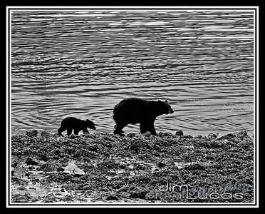 Alaska 2011 Highlights Assorted for slide show