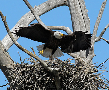 Eagles 2011